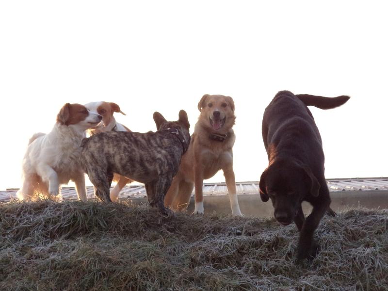 Hundebetreuung Anbieten